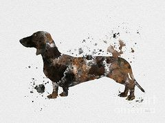 """Dachshund Dog Art  - Sausage Dog - Doxie Dog Art Drawing Print 4"""" X 6"""" print. Description from etsy.com. I searched for this on bing.com/images"""