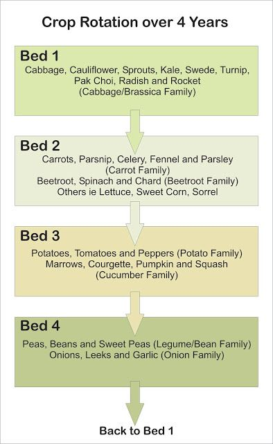 Another crop rotation plan. I'm developing a collection of them.