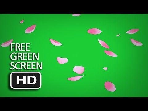 Best Free Green Screen Falling Sakura Cherry Blossom Leaf Youtube Free Green Screen Greenscreen Green Screen Video Backgrounds