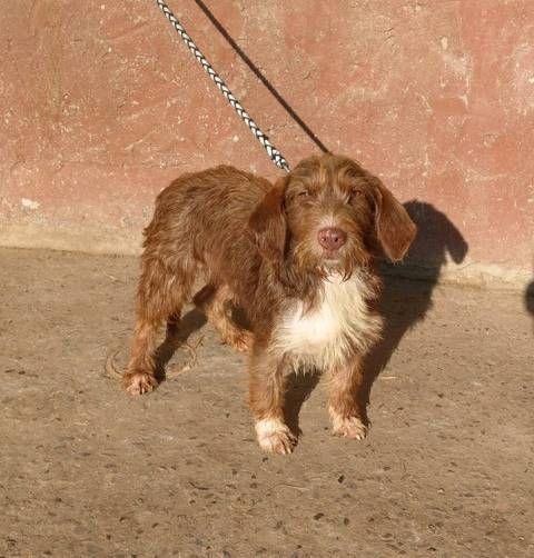 Junge Hundin Tierschutz Hund Mischling Maria In Hessen Rosbach