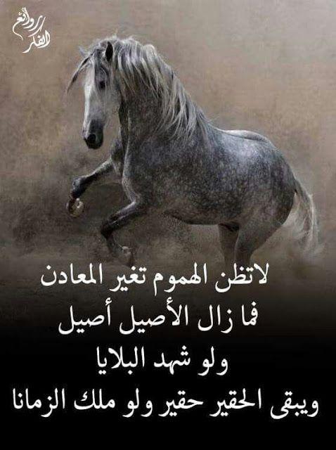 خلفيات مكتوب عليها كلام قوي وحكم مميزة Beautiful Arabic Words Arabic Love Quotes Talking Quotes