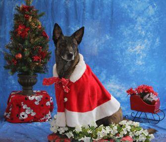 Mahogany Ridge: Your Dog's Training Center!