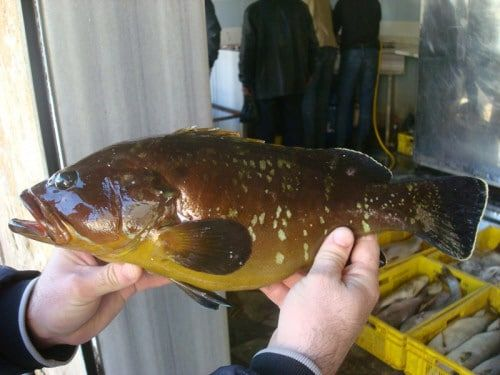 انواع سمك اللقز وخصائص كل نوع وفوائده Fish