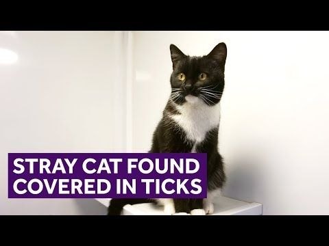 Young Stray Cat Found Covered In 11 Ticks A Six Month Old Cat Found Covered In 11 Ticks And Living In An Outdoor Cupboard Is Now On T Stray Cat Cats Old Cats