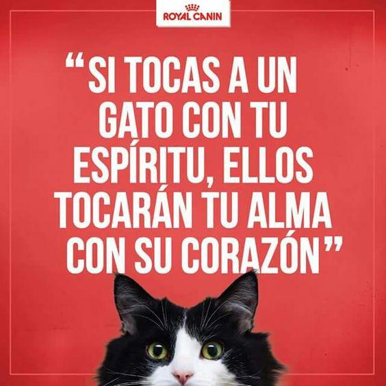 Si tocas a un gato con tu espiritu,, ellos tocaran tu alma con su corazon <3