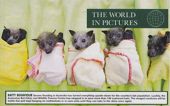 {batty behaviour} this image always gets to me; bats can be cute!