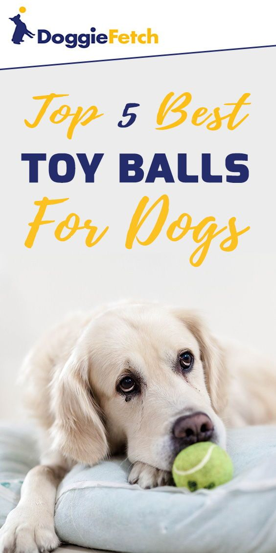 Top 5 Best Toy Balls For Dogs Dogs Cool Toys Toys