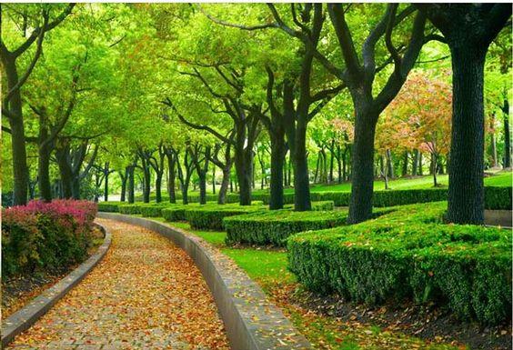 2015 nuevo personalizar tamaño ampliar bosques escénicos 3d papel tapiz mural…