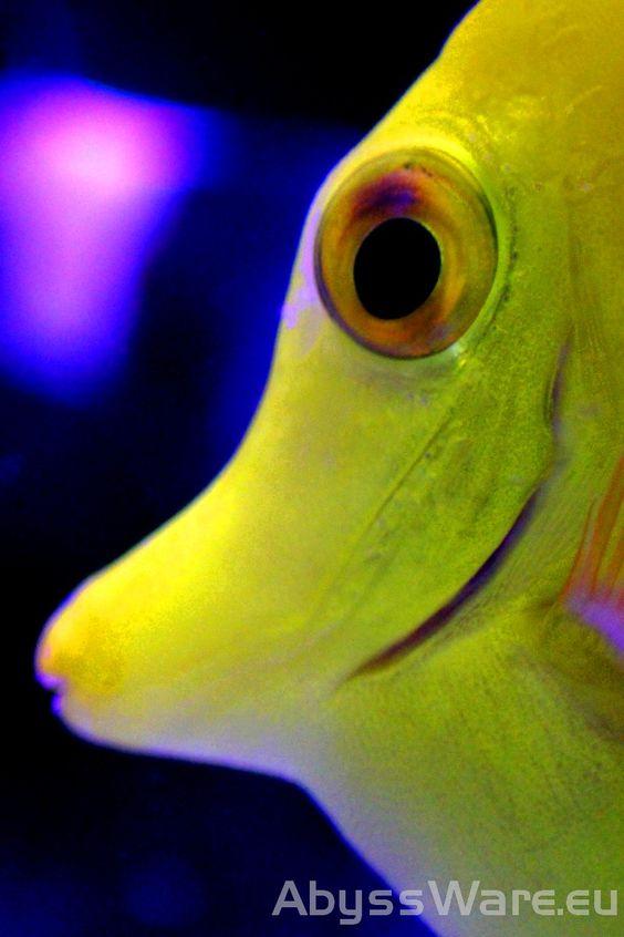 Yellow Tang Close Up In 2020 Macro Photography Reef Tank Saltwater