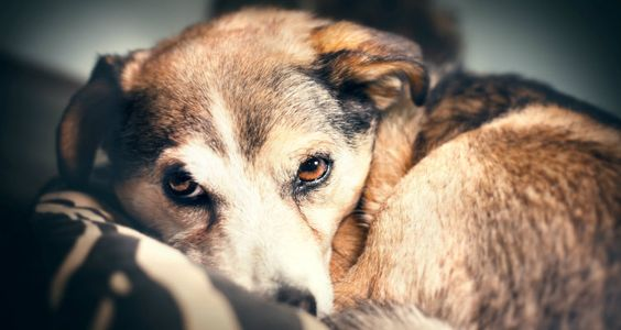 How Owners Lose Their Dogs' Trust | Top Dog Tips