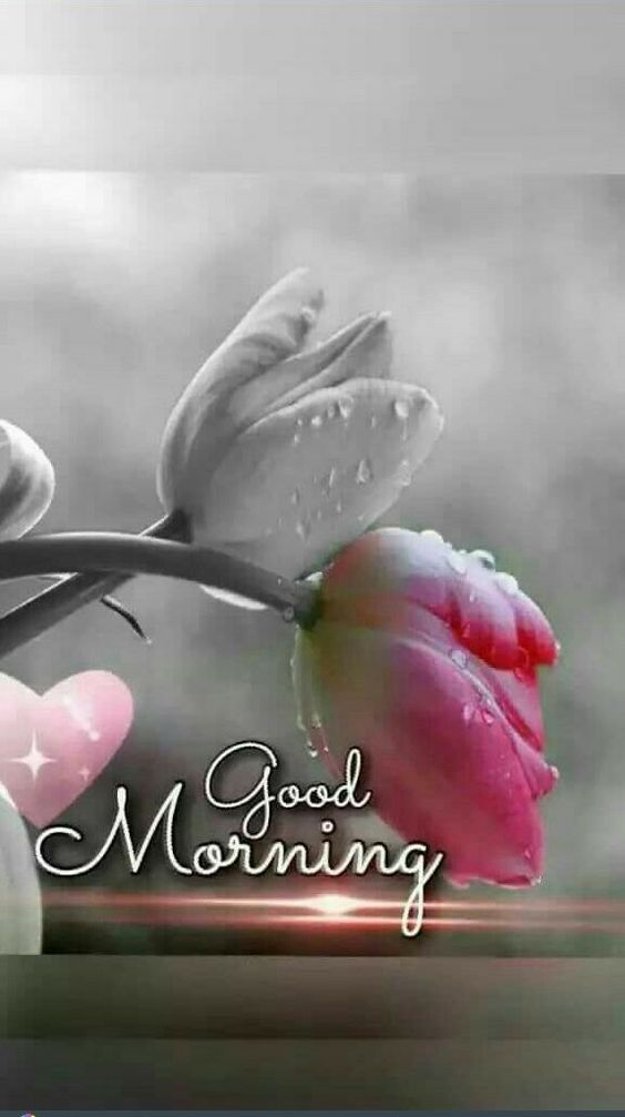 Good Morning Messages In 2020 Good Morning Images Flowers Good Morning Greetings Good Evening Greetings