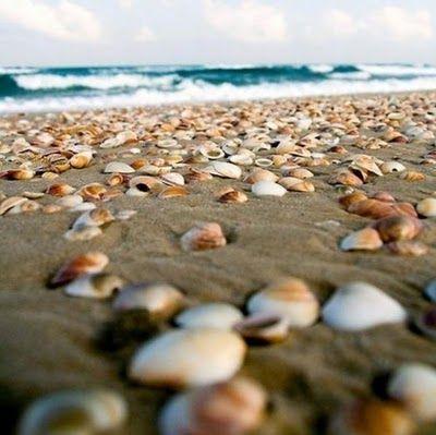 seashells..