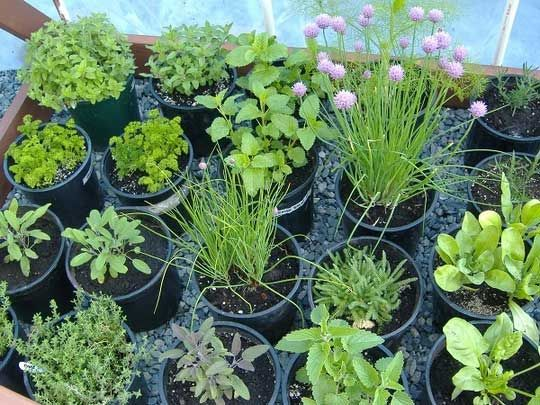Article on easy herbs to grow
