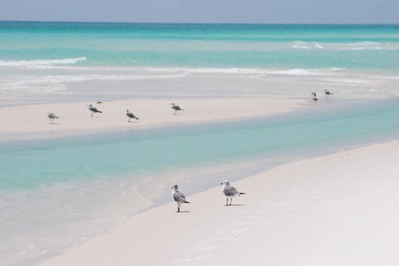 Gulls on Navarre Beach at at the Gulf Islands National Seashore The water in the Gulf of Mexico along the Panhandle of Florida is often a spectacular spectrum of aquamarine hues. The brilliant white sand in that area is nearly pure quartz, its origin ...