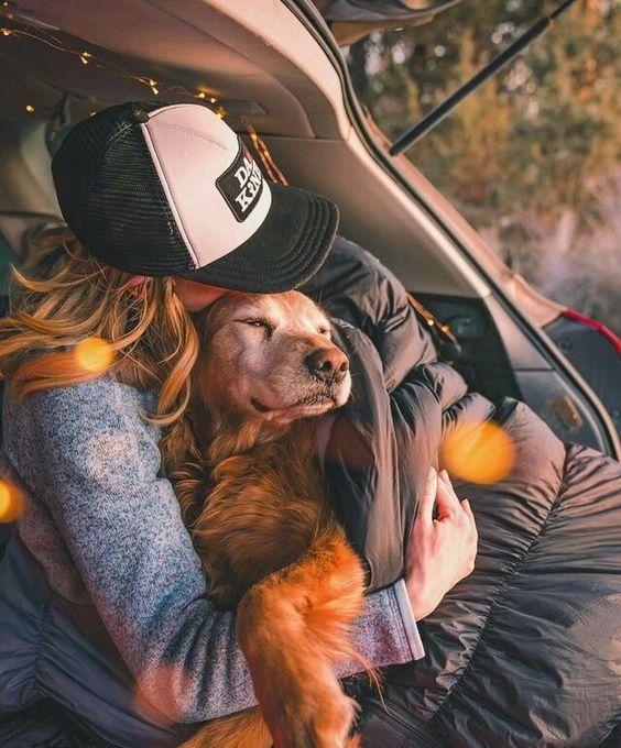 Szjg Instagram Dogs Golden Retriever Puppies Pets