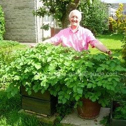 Best container gardening guide that I've found. Plus this guy is adorable.