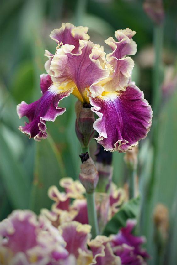 Lienzos, Orquideas, Iris Amarillo, PúRpura, JardíN Florece Las Plantas Vegetales, JardineríA Flores áRboles BotáNica, Jardines De Flores, Plantas,