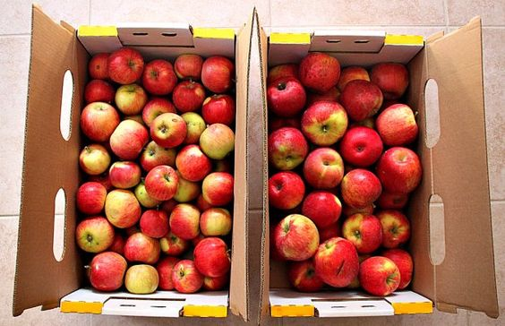 Of all the varieties of apples out there, the honeycrisp is one of the most popular.