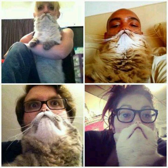 Cat bearding. I just love it! So funny!