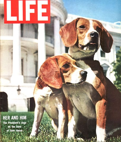 Lbj Dog Names Him And Her