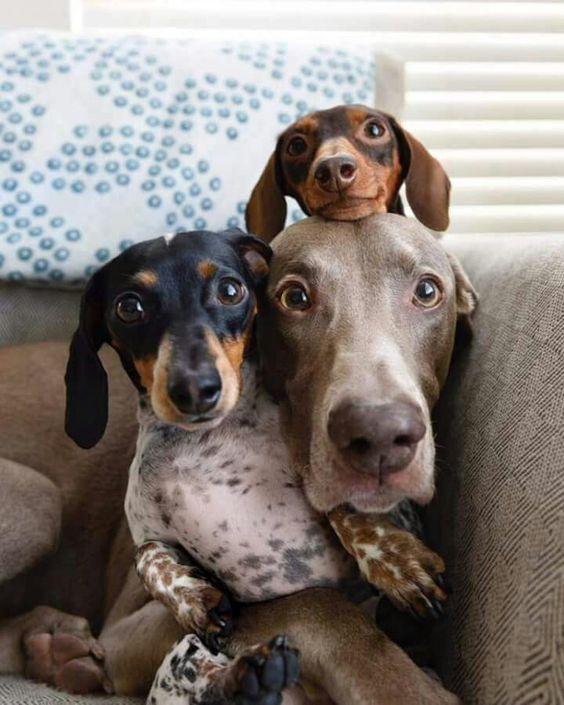 Animal friendship in bloom. #adorableanimals #cuteanimals #dachsund