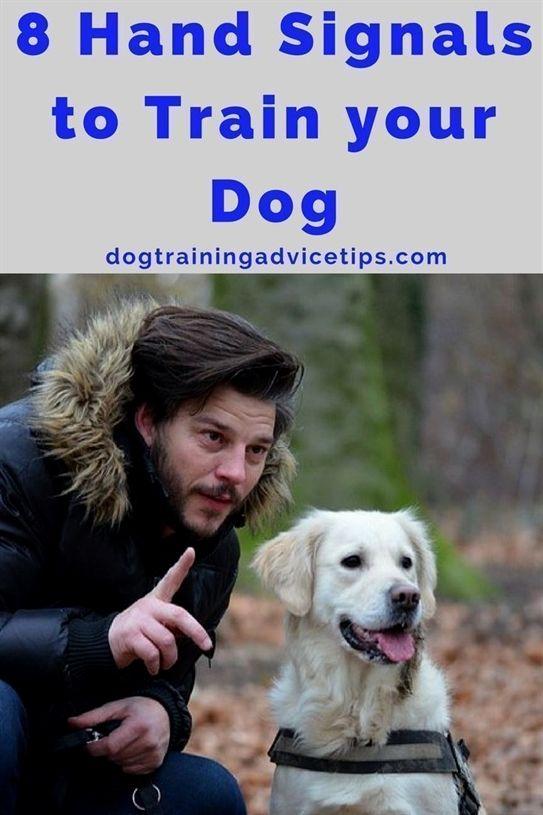 Dog Training Jackson Tn Dog Training Toys Dog Training 60035