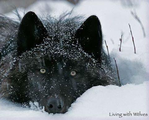 Peek a boo...snow stalker, ha ha! So cute!