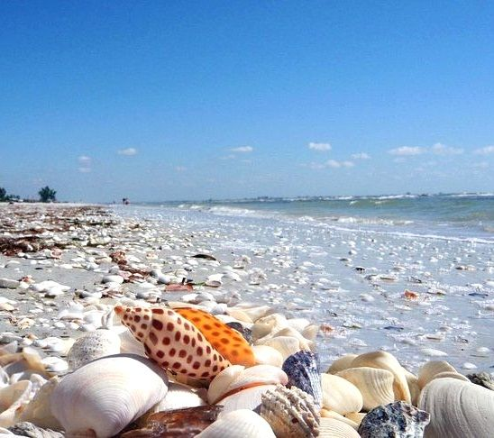 Best Beaches Near Tampa For Shells