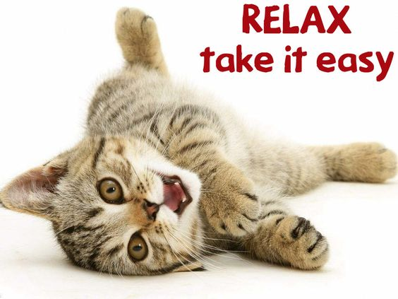 Image result for relax take it easy animal