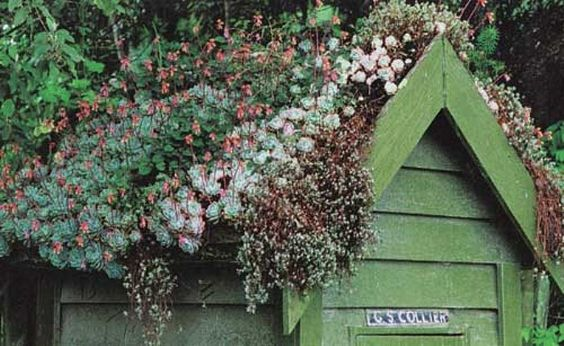 in love with this green roof on shed! Click and scroll for more info about living roof construction.