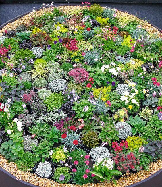 stein dekoration mit kleinen pflanzen im garten - 53 erstaunliche - moderne steingarten bilder