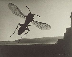Fly and Landscape, Man Ray, 1935–36. © Man Ray Trust ARS-ADAGP