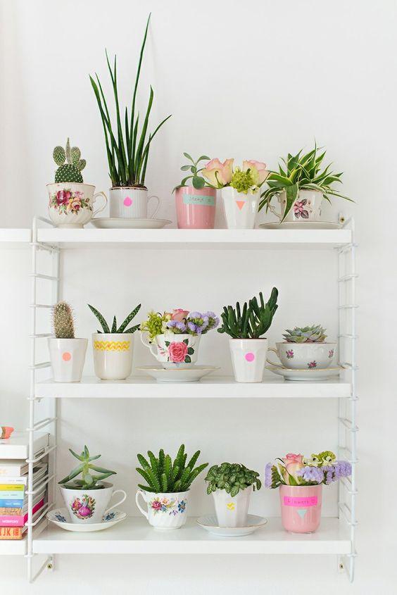 suculentas plantadas em xicaras de chá dispostas numa estante enfeitam de forma delicada:
