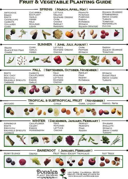 Beau Best 25+ Fall Planting Guide Ideas On Pinterest | Fall Planting Vegetables,  Organic Fertilizer For Vegetables And Spring Vegetable Garden