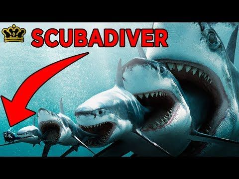 What If Megalodon Sharks Were Still Alive Youtube Shark Pictures Sharks Scary Megalodon