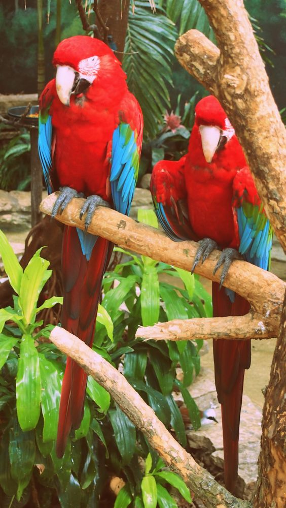 Parrots are the best part of the zoo!
