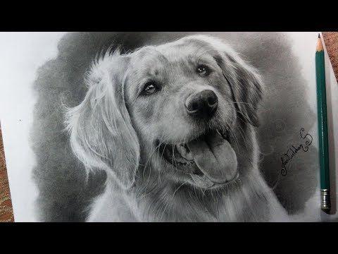 Como Dibujar Un Perro Realista Aprende A Hacer Pelaje Realista Tutorial Muy Facil Youtube Como Dibujar Un Perro Como Dibujar Como Dibujar El Pelo