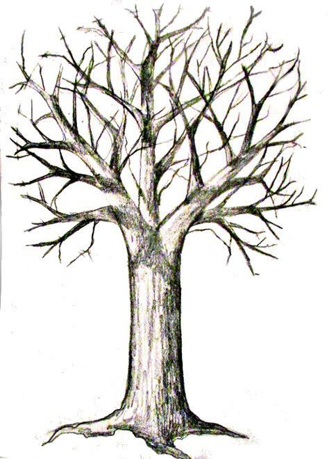 How To Draw A Tree Happy Family Art Trees Drawing Tutorial Tree Drawings Pencil 3d Drawing Tutorial Find & download free graphic resources for trees cartoon. trees drawing tutorial tree drawings