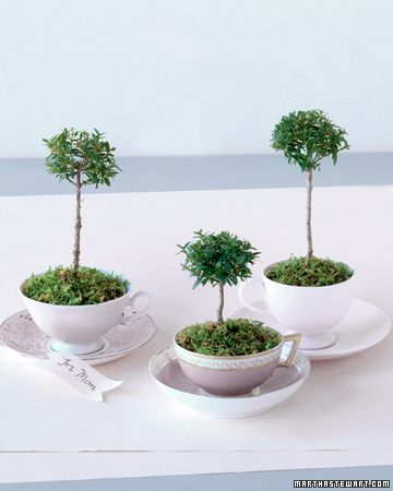 Tree Cups Orphaned teacups make perfect little temporary pots for young myrtle trees that can then be used as gifts, party favors, or place settings. Put a thin layer of gravel in each cup. Plant topiaries in potting soil, and cover the dirt's surface with moss. Place near a window, and water when dry. After a week or so, transplant to a pot with a drainage hole.: