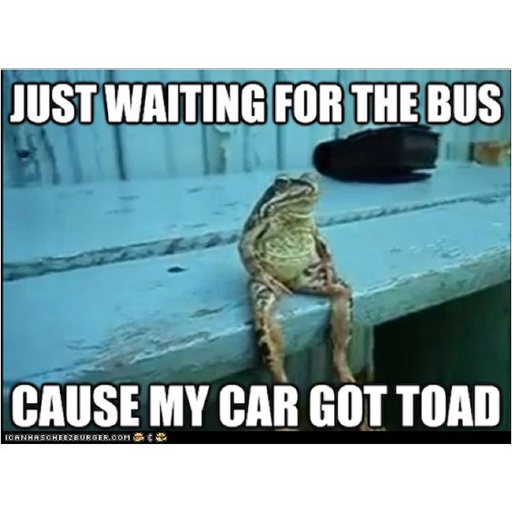 What kind of a frog sits like that?