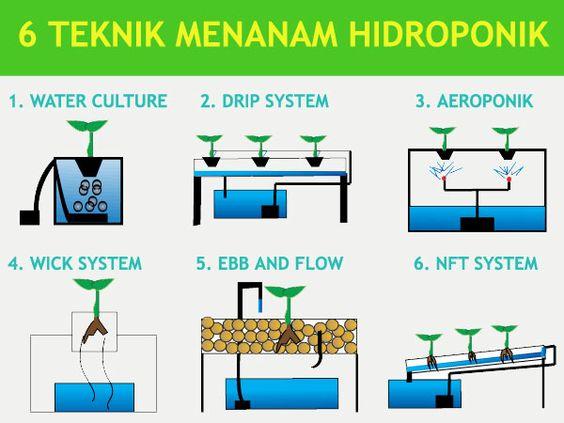 metode hidroponik