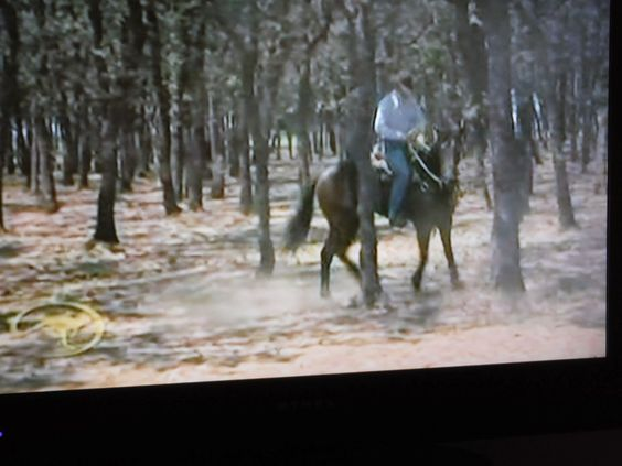 Bay State Brumby: World's Best Brumby