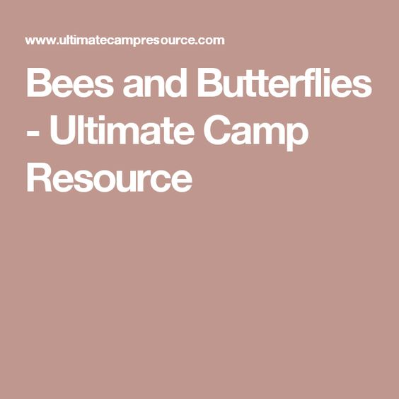 Bees and Butterflies - Ultimate Camp Resource