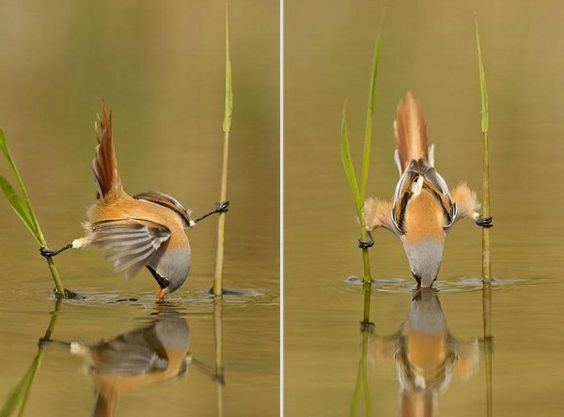 Bird Olympics  Wildlife Photography by Edwin Kats - Pondly)
