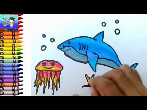 Menggambar Dan Mewarnai Ikan Hiu Dan Ubur Ubur Mewarnai Dengan