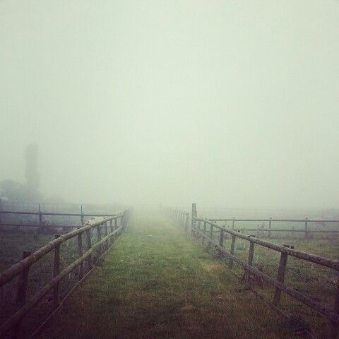 Foggy autumn morning at Hooters Hall in Fenland