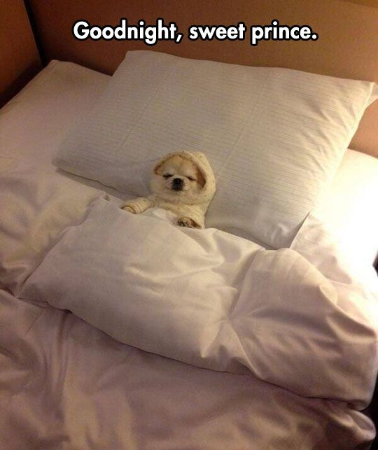 21 animals who will definitely not stay up until midnight