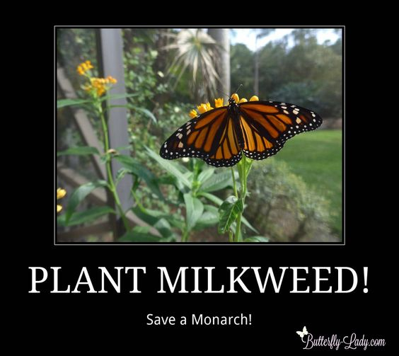 monarch butterfly and milkweed relationship counseling