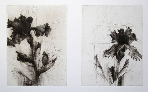 Jake Muirhead, 'Middlebury Irises', etching and drypoint: