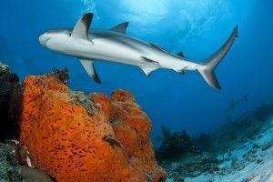 Shark fishing banned in Marshall Islands!